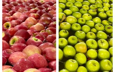 Westcastle_FB_apples