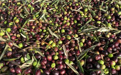 john-cameron-WCyjPJBzSAU-unsplash olives