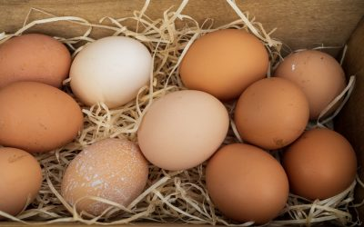 nick-fewings-qlLCBkTSYAI-unsplash eggs1