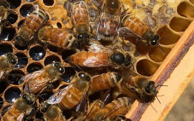 springside apiaries